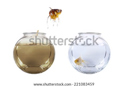 Conceptual image of a fish jumping from his polluted bowl into a clean fishbowl - stock photo