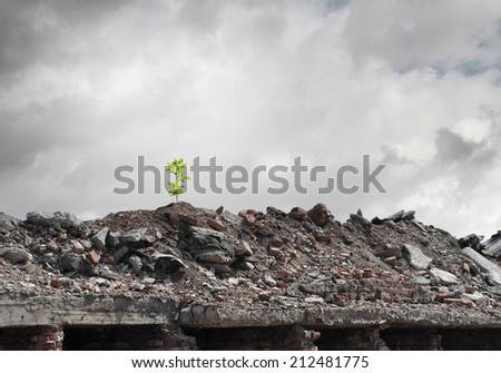 Conceptual image of green sprout growing on ruins - stock photo
