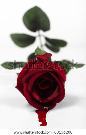 Black Rose Dripping Blood 4910 Loadtve