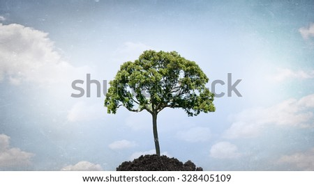 Conceptual image with green tree growing in soil