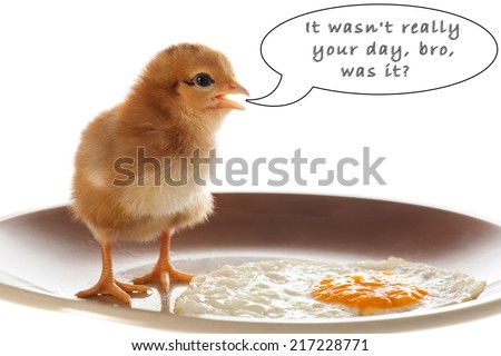 Conceptual photo of chicken and fried egg on a plate gesturing miss fortune isolated - mobbing and stress leading to burn out syndrome - stock photo