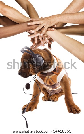 Conceptual Rhodesian ridgeback puppy , listening music, group of multiracial  hands in top - stock photo