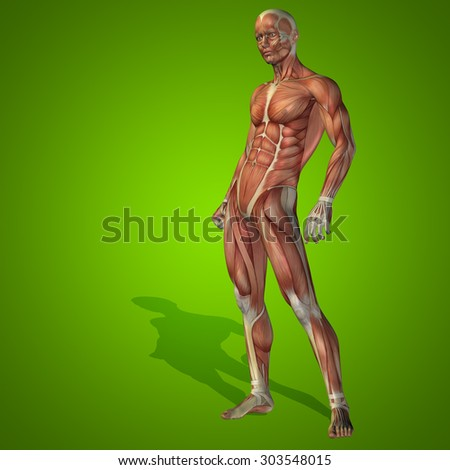 Conceptual strong human, man 3D anatomy body with muscle for health, sport on green background for medicine sport, male, muscular, medical, health, medicine, biology, anatomical, strong fitness design