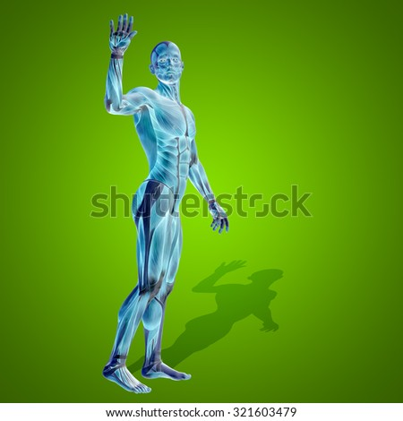 Conceptual strong human, man 3D anatomy body with muscle for health, sport on green background for medicine, sport, male, muscular, medical, health, medicine, biology, anatomical strong fitness design - stock photo