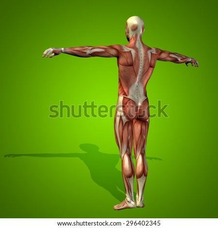 Conceptual strong human or man 3D anatomy body with muscle on green background metaphor to medicine, sport, male, muscular, medical, health, medicine, biology, anatomical, strong, fitness, design