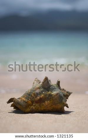 Conch - stock photo
