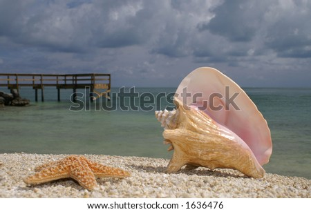Conch on Beach with Starfish - stock photo