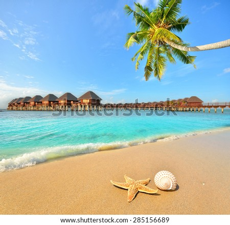 Conch shell and starfish at tropical golden sand beach -- Tropical beach vacation and travel concept   - stock photo