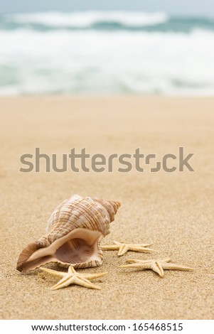Conch shell and starfish on the beach close up - stock photo