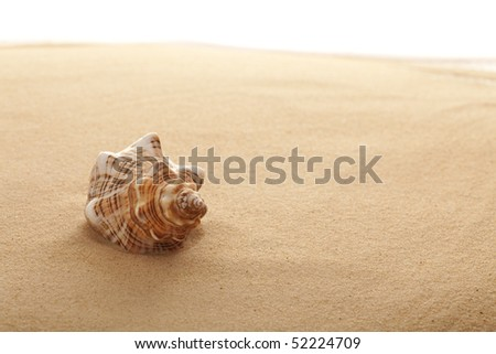Conch Shell on the Beach at Sunrise - stock photo