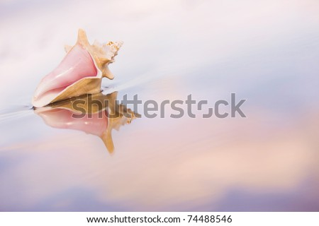 Conch shell on the sand with reflections and pink sunset hues. - stock photo
