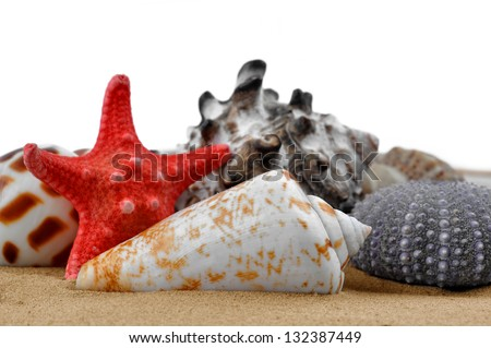 Conch shell with starfish isolated on white background