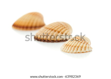 conch shells isolated on white