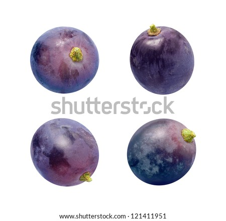 Concord Grapes Isolated on a white background - stock photo