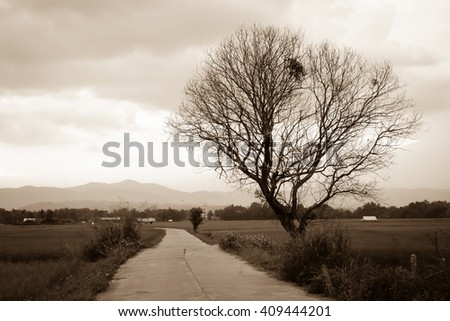 concrete road and dead tree