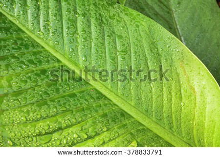 Condensation on a green leaf - stock photo