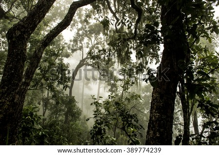 Condition of the forest in the rain forest on Mon Liam,Chiang mai, Thailand - stock photo