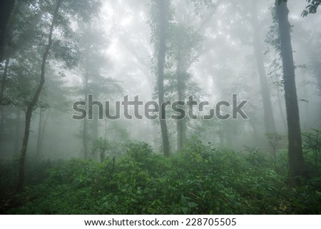 Condition of the forest in the rain forest on Mount Mokoju,Kamphaeng Phet, Thailand - stock photo