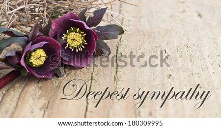 condolence card  with dark christroses/deepest sympathy/english - stock photo