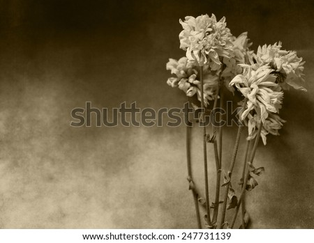 Condolence card with dry flowers - stock photo