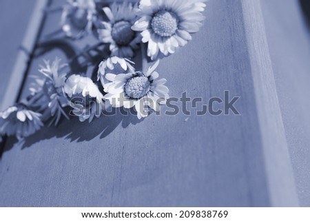 condolences card background cover - stock photo