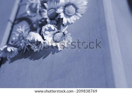 condolences card background cover - stock photo