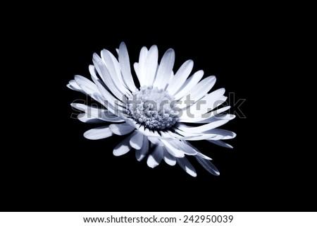 condolences card flower - stock photo