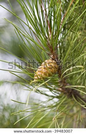 Cone - stock photo