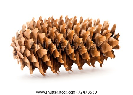 cone isolated on a white background - stock photo
