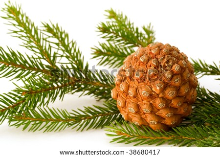 Cone on fir-tree brunch over white background
