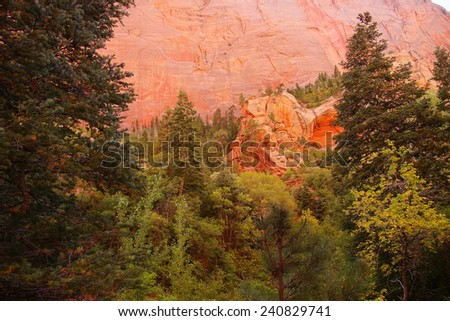 Conefirs contrast with red and orange cliffs in narrow canyon along the Taylor Creek trail, Kolob Canyon, Zion National Park, Utah - stock photo