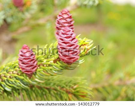 cones - stock photo