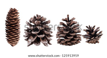 Cones collection of coniferous trees, isolated