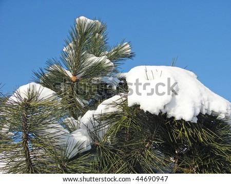 Cones in snow - stock photo