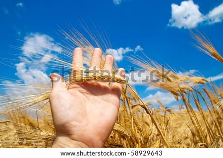 cones in the hand over new harvest - stock photo