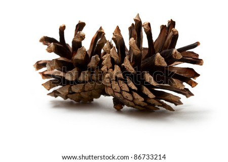 Cones isolated on the white background - stock photo