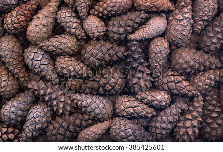 cones of coniferous plants close-up, beautiful background - stock photo