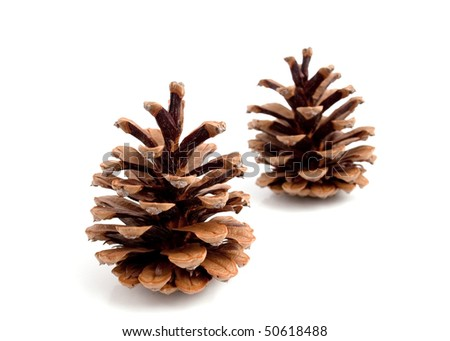Cones pine on a white background