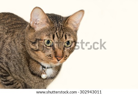 Confusing tabby cat or looking something - stock photo