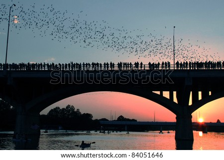 Congress Avenue Bridge bats in Austin during sunset.