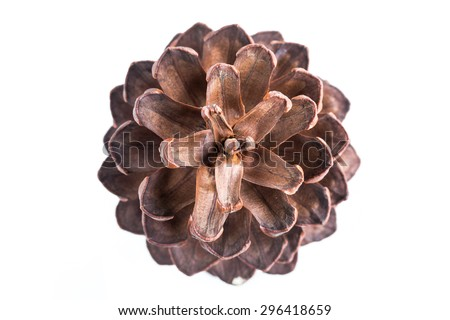 Conifer cones isolated on white background - stock photo