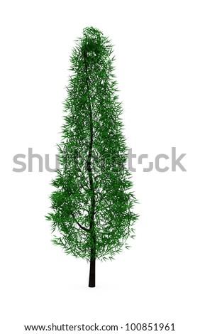 Conifer pine tree isolated on white background - stock photo