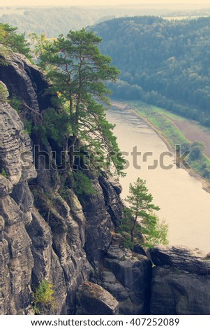 Conifer tree on a cliff on the background of water. Toned - stock photo