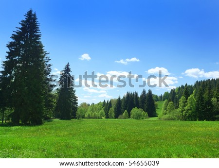 coniferous forest and meadow in sunny day - stock photo