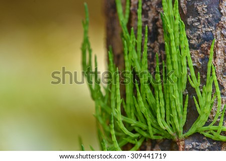 Coniferous forest. Background with bright spruce branches. - stock photo
