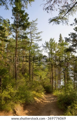 Coniferous forest in the morning near the lake Baikal.