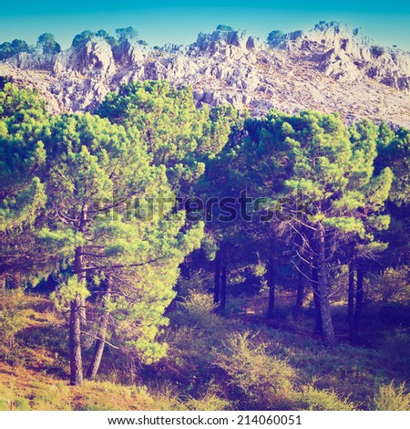Coniferous Forest on the Background of Mountains in Spain, Instagram Effect