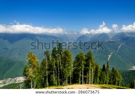 Coniferous trees growing on a hillside - stock photo