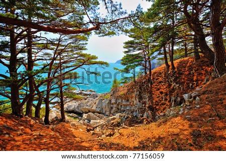coniferous trees on a rocky seashore - stock photo