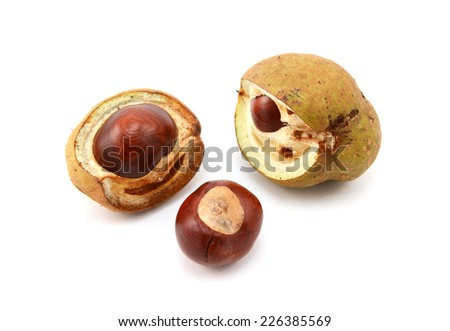 Conker and opened seed cases from a red horse chestnut tree, isolated on a white background - stock photo